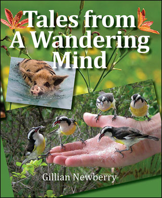 Tales from a Wandering Mind by Gill Newberry