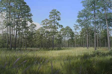 Longleaf Glade, oil on canvas by Philip Juras © 2008