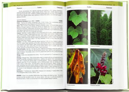 page from Forest Plants of the Southeast and Their Wildlife Uses by James H. Miller and Karl V. Miller