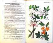 page from Newcomb's  Wildflower Guide by Lawrence Newcomb